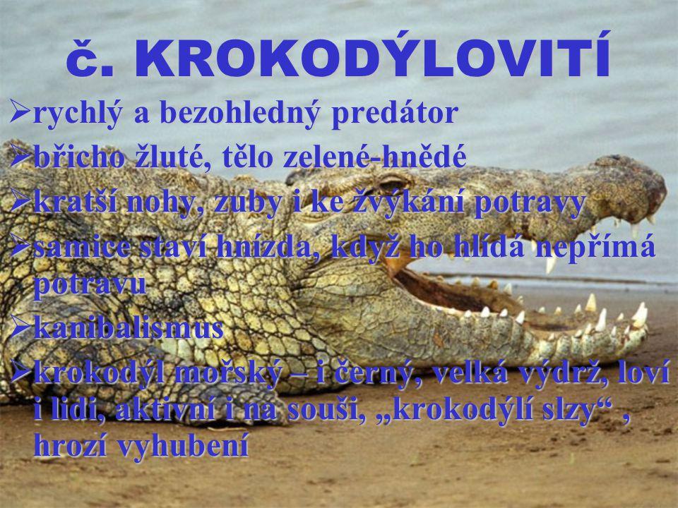 č. KROKODÝLOVITÍ  rychlý a bezohledný predátor  břicho žluté, tělo zelené-hnědé  kratší nohy, zuby i ke žvýkání potravy  samice staví hnízda, když