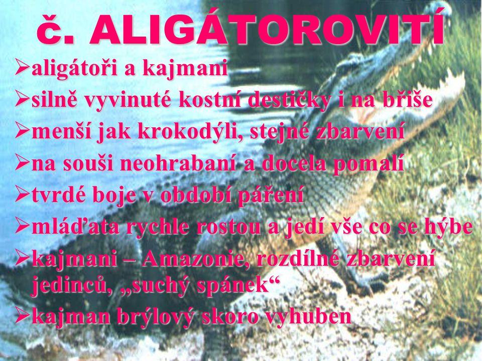 č. ALIGÁTOROVITÍ  aligátoři a kajmani  silně vyvinuté kostní destičky i na břiše  menší jak krokodýli, stejné zbarvení  na souši neohrabaní a doce