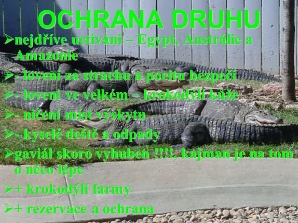 OCHRANA DRUHU  nejdříve uctíváni – Egypt, Austrálie a Amazonie  - loveni za strachu a pocitu bezpečí  - loveni ve velkém – krokodýlí kůže  - ničen