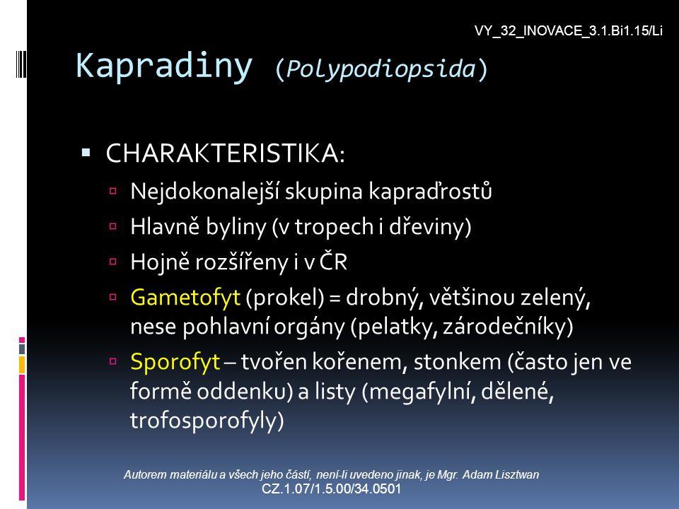 Kapradiny (Polypodiopsida) CCHARAKTERISTIKA: NNejdokonalejší skupina kapraďrostů HHlavně byliny (v tropech i dřeviny) HHojně rozšířeny i v ČR