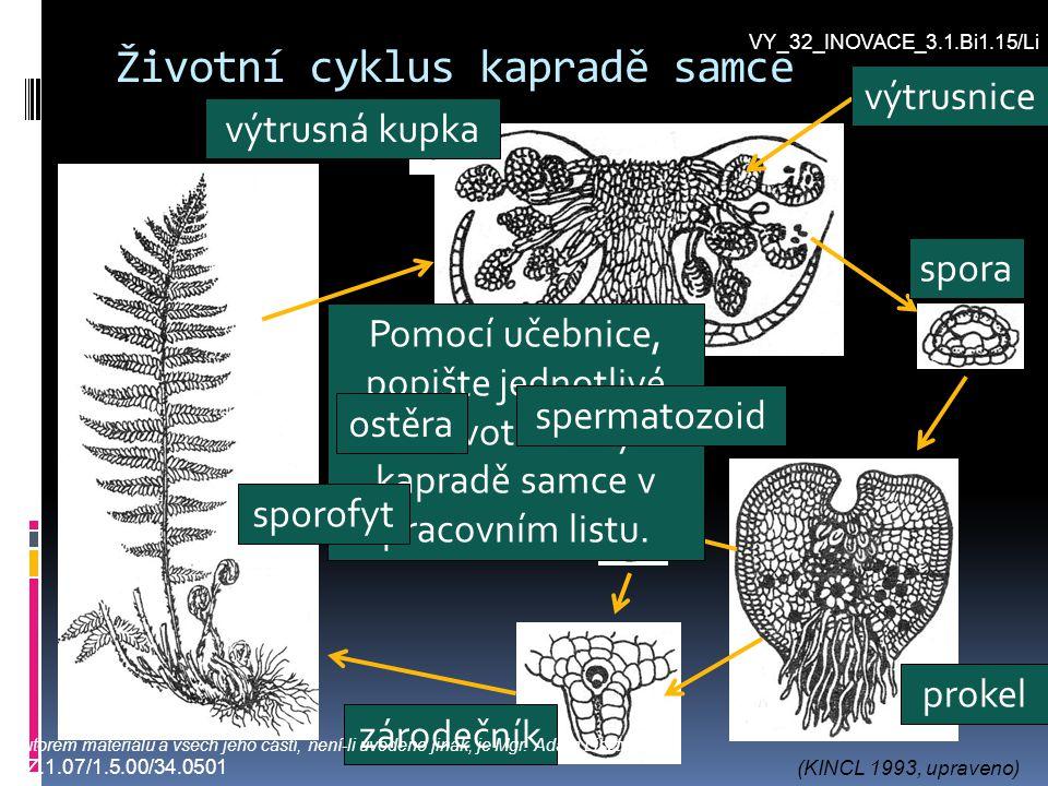 Životní cyklus kapradě samce 1 2 3 4 5 6 7 Pomocí učebnice, popište jednotlivé části životního cyklu kapradě samce v pracovním listu. spora prokel spe