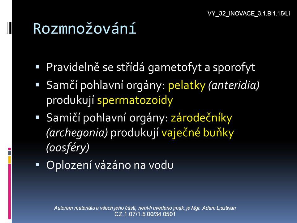 Rozmnožování  Pravidelně se střídá gametofyt a sporofyt  Samčí pohlavní orgány: pelatky (anteridia) produkují spermatozoidy  Samičí pohlavní orgány