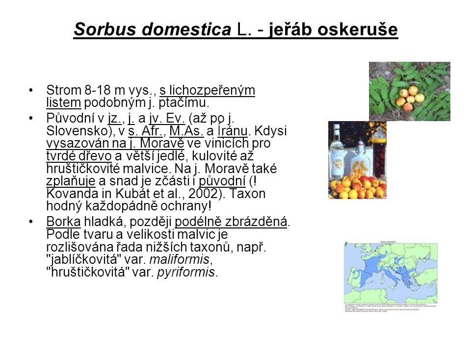 Sorbus domestica L. - jeřáb oskeruše Strom 8-18 m vys., s lichozpeřeným listem podobným j. ptačímu. Původní v jz., j. a jv. Ev. (až po j. Slovensko),