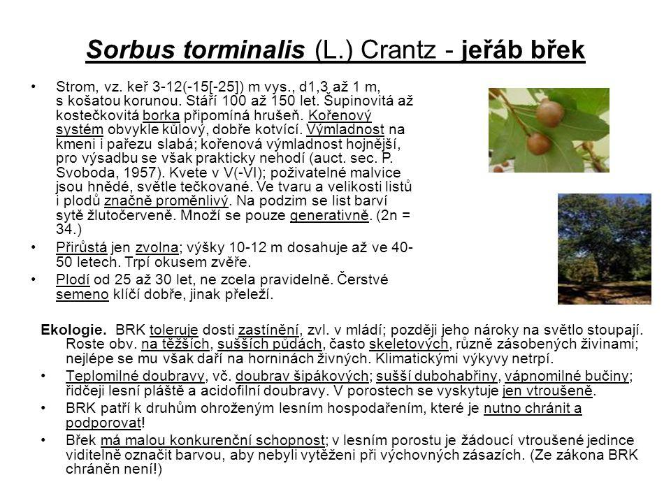 Sorbus torminalis (L.) Crantz - jeřáb břek Ekologie. BRK toleruje dosti zastínění, zvl. v mládí; později jeho nároky na světlo stoupají. Roste obv. na