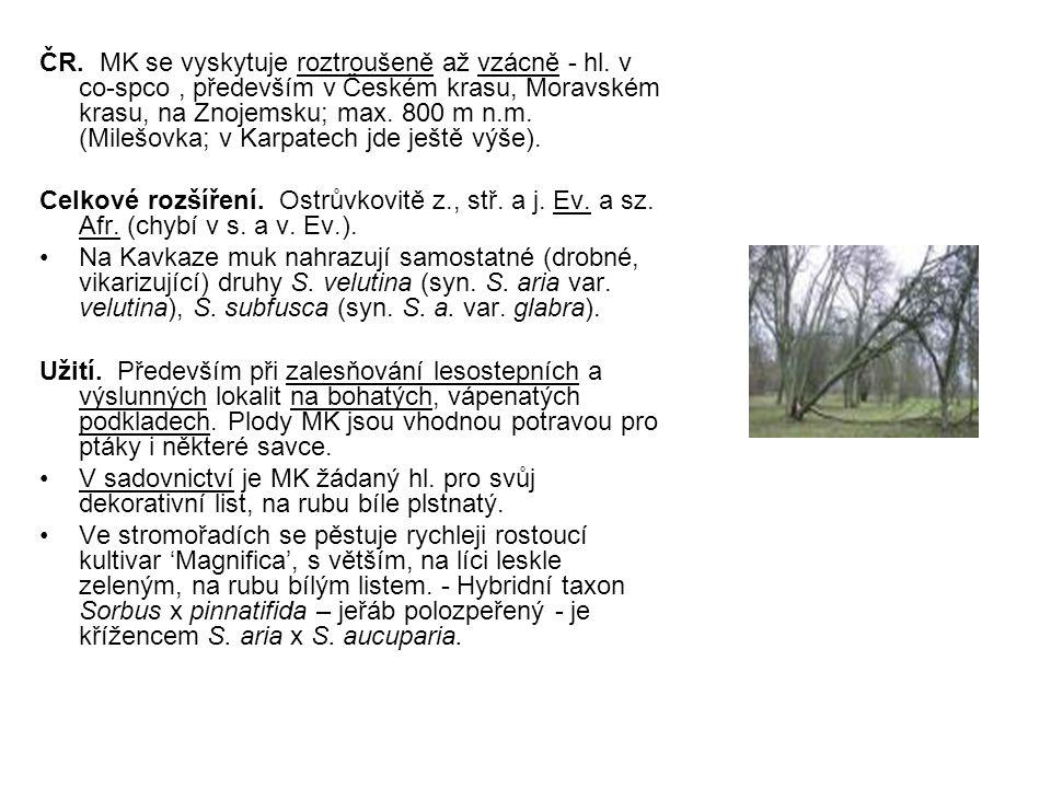 ČR. MK se vyskytuje roztroušeně až vzácně - hl. v co-spco, především v Českém krasu, Moravském krasu, na Znojemsku; max. 800 m n.m. (Milešovka; v Karp