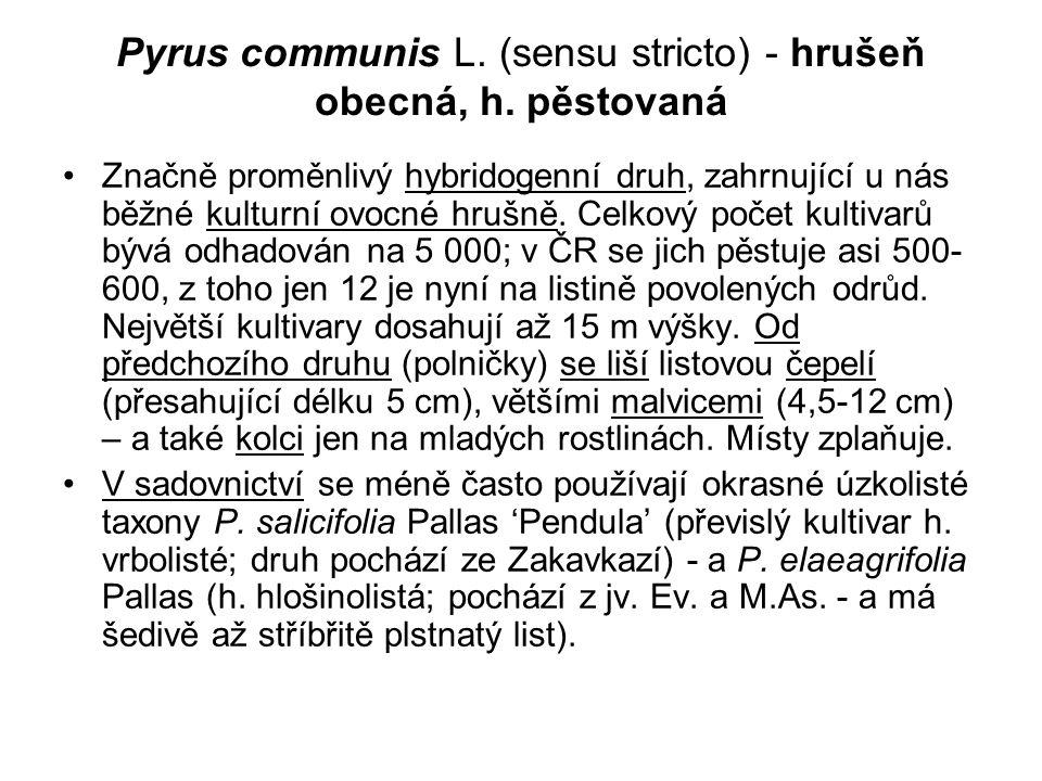 Pyrus communis L. (sensu stricto) - hrušeň obecná, h. pěstovaná Značně proměnlivý hybridogenní druh, zahrnující u nás běžné kulturní ovocné hrušně. Ce