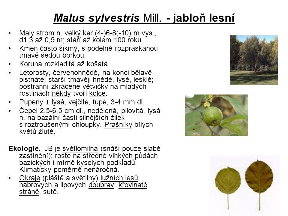 Malus sylvestris Mill. - jabloň lesní Malý strom n. velký keř (4-)6-8(-10) m vys., d1,3 až 0,5 m; stáří až kolem 100 roků. Kmen často šikmý, s podélně