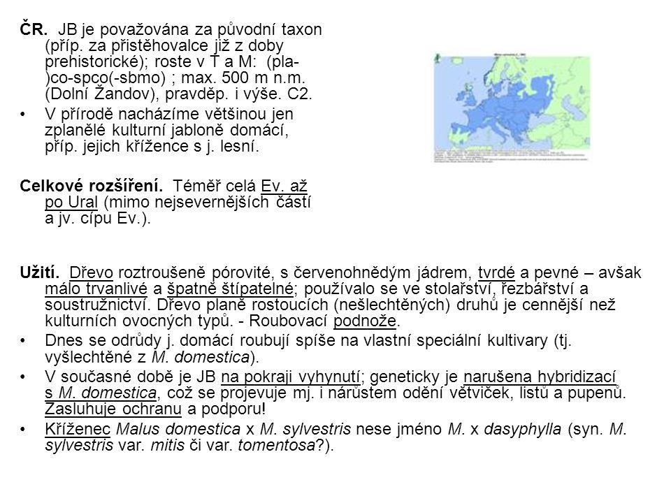 ČR. JB je považována za původní taxon (příp. za přistěhovalce již z doby prehistorické); roste v T a M: (pla- )co-spco(-sbmo) ; max. 500 m n.m. (Dolní