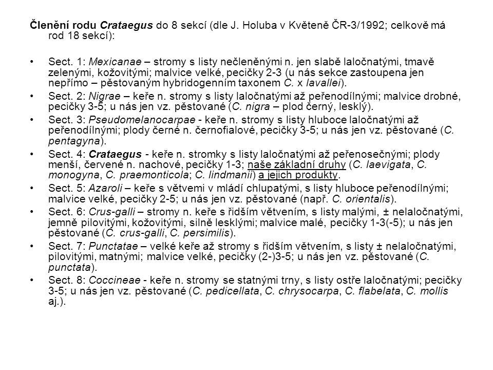 Členění rodu Crataegus do 8 sekcí (dle J. Holuba v Květeně ČR-3/1992; celkově má rod 18 sekcí): Sect. 1: Mexicanae – stromy s listy nečleněnými n. jen
