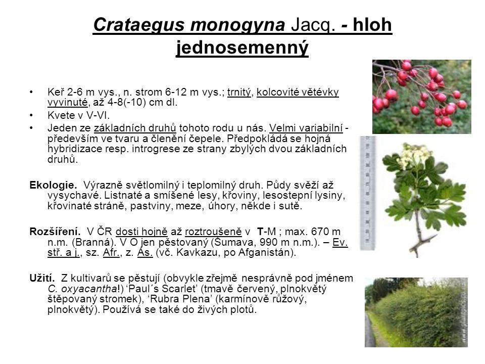 Crataegus monogyna Jacq. - hloh jednosemenný Keř 2-6 m vys., n. strom 6-12 m vys.; trnitý, kolcovité větévky vyvinuté, až 4-8(-10) cm dl. Kvete v V-VI
