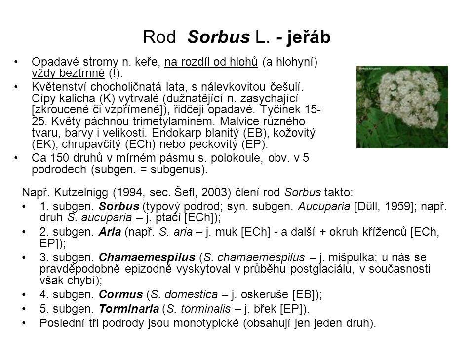 Rod Sorbus L. - jeřáb Opadavé stromy n. keře, na rozdíl od hlohů (a hlohyní) vždy beztrnné (!). Květenství chocholičnatá lata, s nálevkovitou češulí.