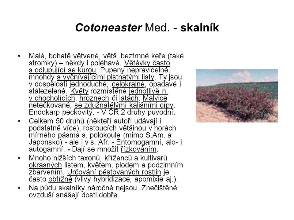 Cotoneaster Med. - skalník Malé, bohatě větvené, větš. beztrnné keře (také stromky) – někdy i poléhavé. Větévky často s odlupující se kůrou. Pupeny ne