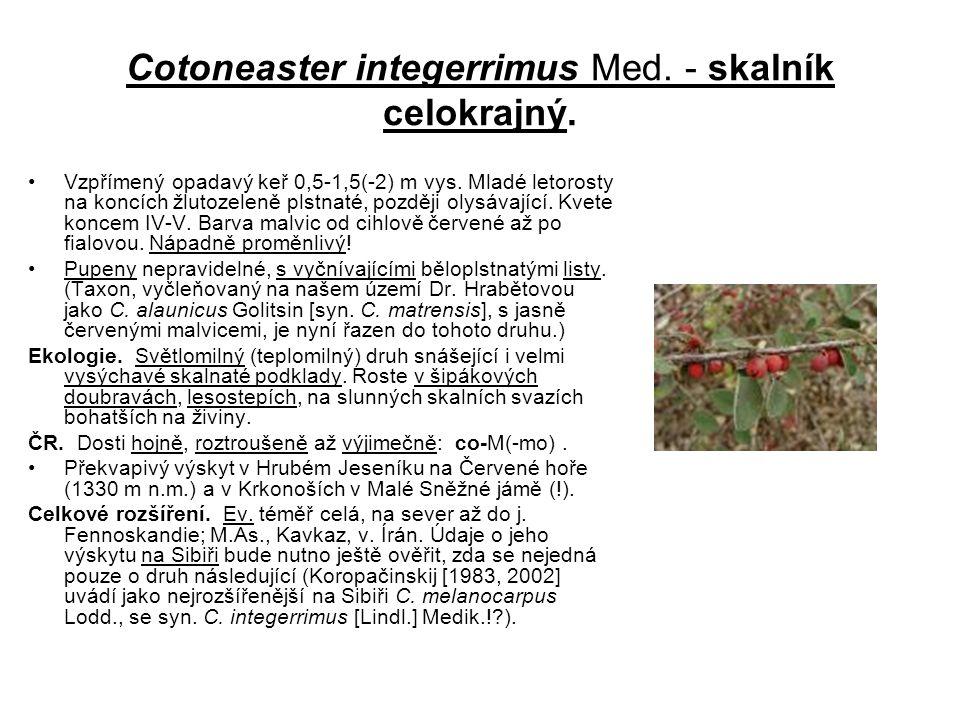 Cotoneaster integerrimus Med. - skalník celokrajný. Vzpřímený opadavý keř 0,5-1,5(-2) m vys. Mladé letorosty na koncích žlutozeleně plstnaté, později