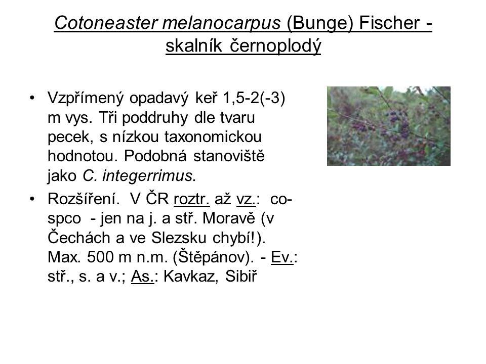 Cotoneaster melanocarpus (Bunge) Fischer - skalník černoplodý Vzpřímený opadavý keř 1,5-2(-3) m vys. Tři poddruhy dle tvaru pecek, s nízkou taxonomick