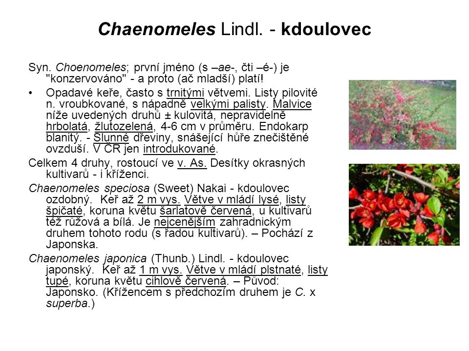 Chaenomeles Lindl.- kdoulovec Syn.