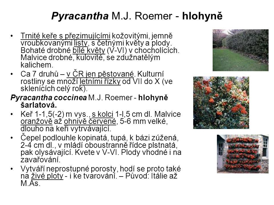 Pyracantha M.J. Roemer - hlohyně Trnité keře s přezimujícími kožovitými, jemně vroubkovanými listy, s četnými květy a plody. Bohaté drobné bílé květy