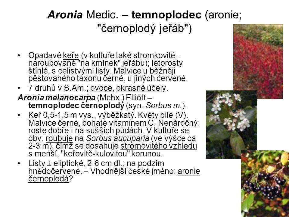 Aronia Medic. – temnoplodec (aronie;