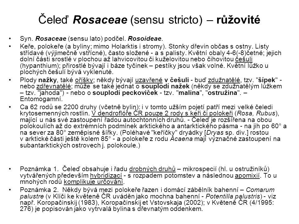 Čeleď Rosaceae (sensu stricto) – růžovité Syn. Rosaceae (sensu lato) podčel. Rosoideae. Keře, polokeře (a byliny; mimo Holarktis i stromy). Stonky dře