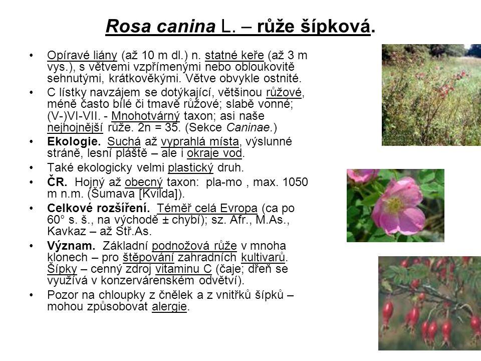 Rosa canina L. – růže šípková. Opíravé liány (až 10 m dl.) n. statné keře (až 3 m vys.), s větvemi vzpřímenými nebo obloukovitě sehnutými, krátkověkým