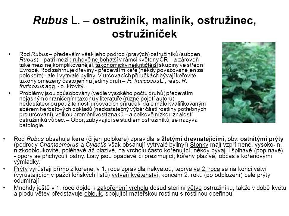 Rubus L. – ostružiník, maliník, ostružinec, ostružiníček Rod Rubus – především však jeho podrod (pravých) ostružiníků (subgen. Rubus) – patří mezi dru
