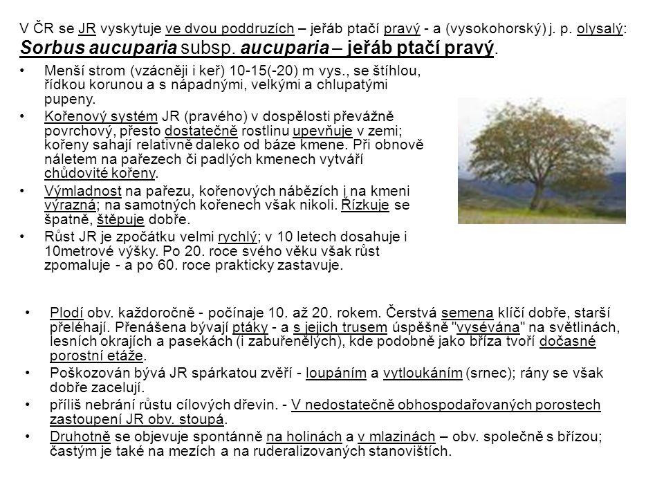 V ČR se JR vyskytuje ve dvou poddruzích – jeřáb ptačí pravý - a (vysokohorský) j. p. olysalý: Sorbus aucuparia subsp. aucuparia – jeřáb ptačí pravý. M