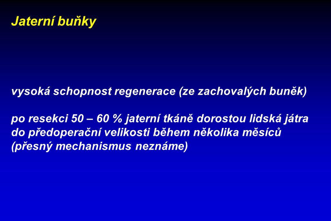 Jaterní buňky vysoká schopnost regenerace (ze zachovalých buněk) po resekci 50 – 60 % jaterní tkáně dorostou lidská játra do předoperační velikosti bě