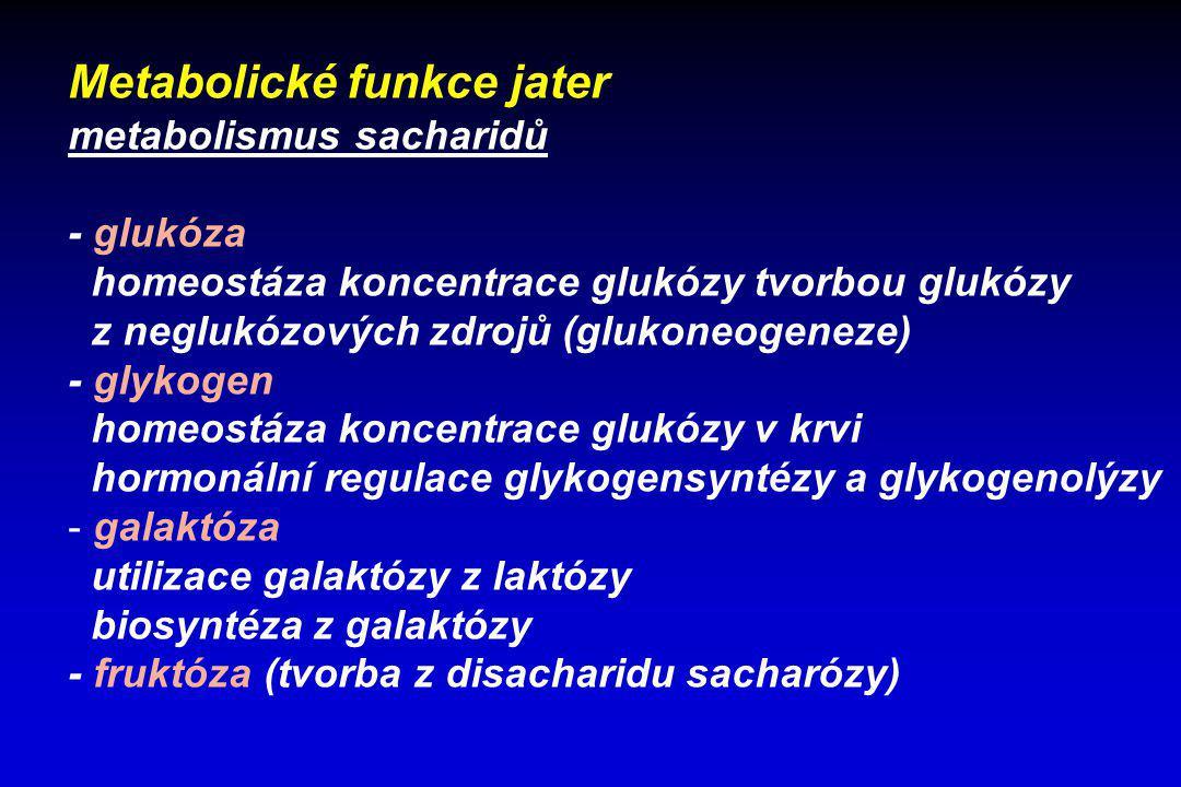 Metabolické funkce jater metabolismus sacharidů - glukóza homeostáza koncentrace glukózy tvorbou glukózy z neglukózových zdrojů (glukoneogeneze) - gly