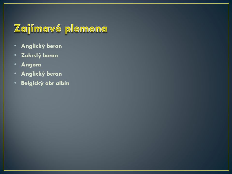 Anglický beran Zakrslý beran Angora Anglický beran Belgický obr albín