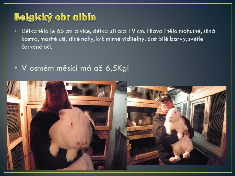 http://www.ifauna.cz/kralici/forum/r/detail/711246/belgicky-obr-albin http://www.barany.sk/pages/vzornik-plemien.php http://www.kralici.cz/ http://cs.wikipedia.org/wiki/Kr%C3%A1l%C3%ADk_dom%C3%A1c%C3 %AD http://cs.wikipedia.org/wiki/Kr%C3%A1l%C3%ADk_dom%C3%A1c%C3 %AD