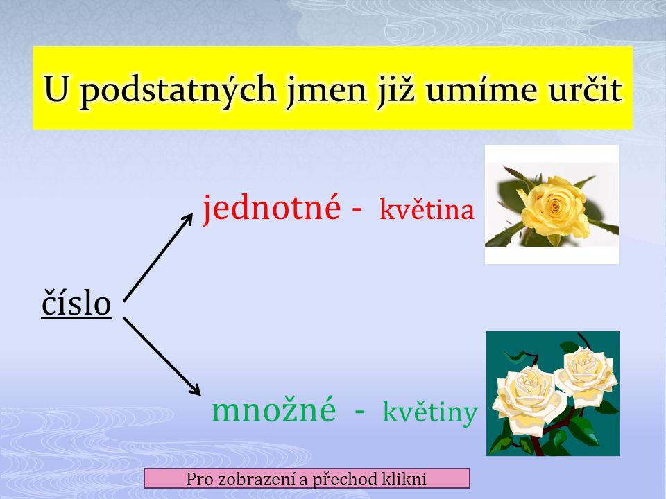 jednotné - květina číslo množné - květiny Pro zobrazení a přechod klikni