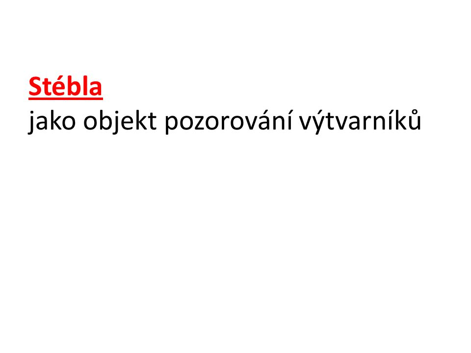 Lenka Hlaváčková : Stébla Pastel na papíře http://www.amag.cz/viktorka.html