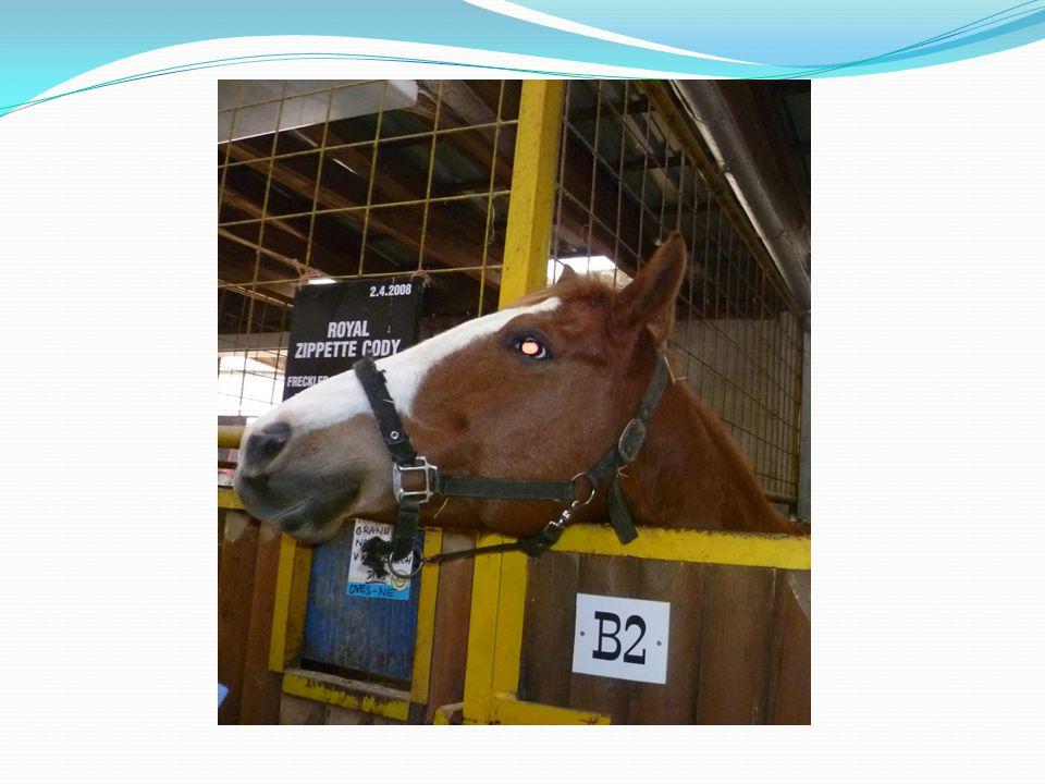 Nejprve jsme se byli podívat ve stájích. Dozvěděli jsme se o koních spoustu zajímavých informací.