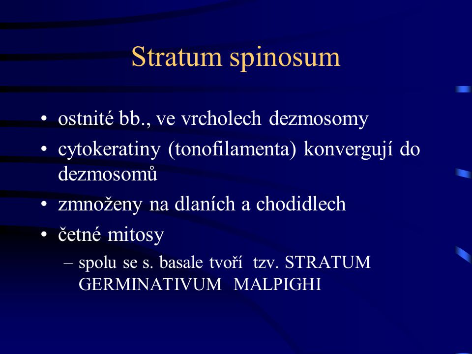 Stratum spinosum ostnité bb., ve vrcholech dezmosomy cytokeratiny (tonofilamenta) konvergují do dezmosomů zmnoženy na dlaních a chodidlech četné mitos