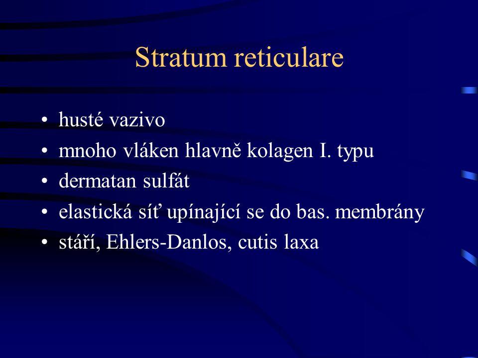 Stratum reticulare husté vazivo mnoho vláken hlavně kolagen I. typu dermatan sulfát elastická síť upínající se do bas. membrány stáří, Ehlers-Danlos,