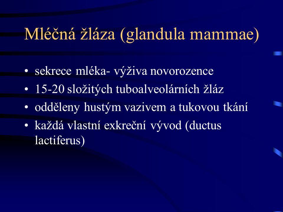 Mléčná žláza (glandula mammae) sekrece mléka- výživa novorozence 15-20 složitých tuboalveolárních žláz odděleny hustým vazivem a tukovou tkání každá v
