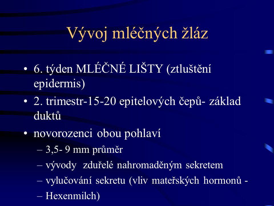 Vývoj mléčných žláz 6. týden MLÉČNÉ LIŠTY (ztluštění epidermis) 2. trimestr-15-20 epitelových čepů- základ duktů novorozenci obou pohlaví –3,5- 9 mm p