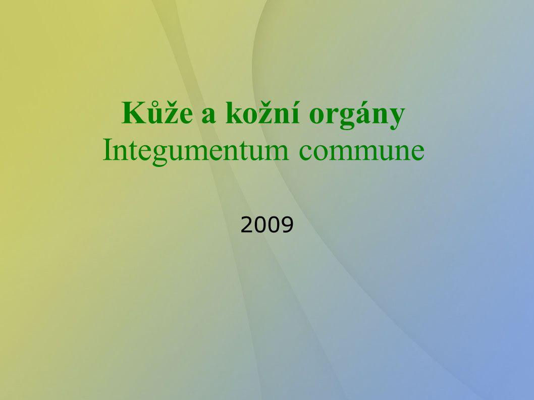 Kůže a kožní orgány Integumentum commune 2009