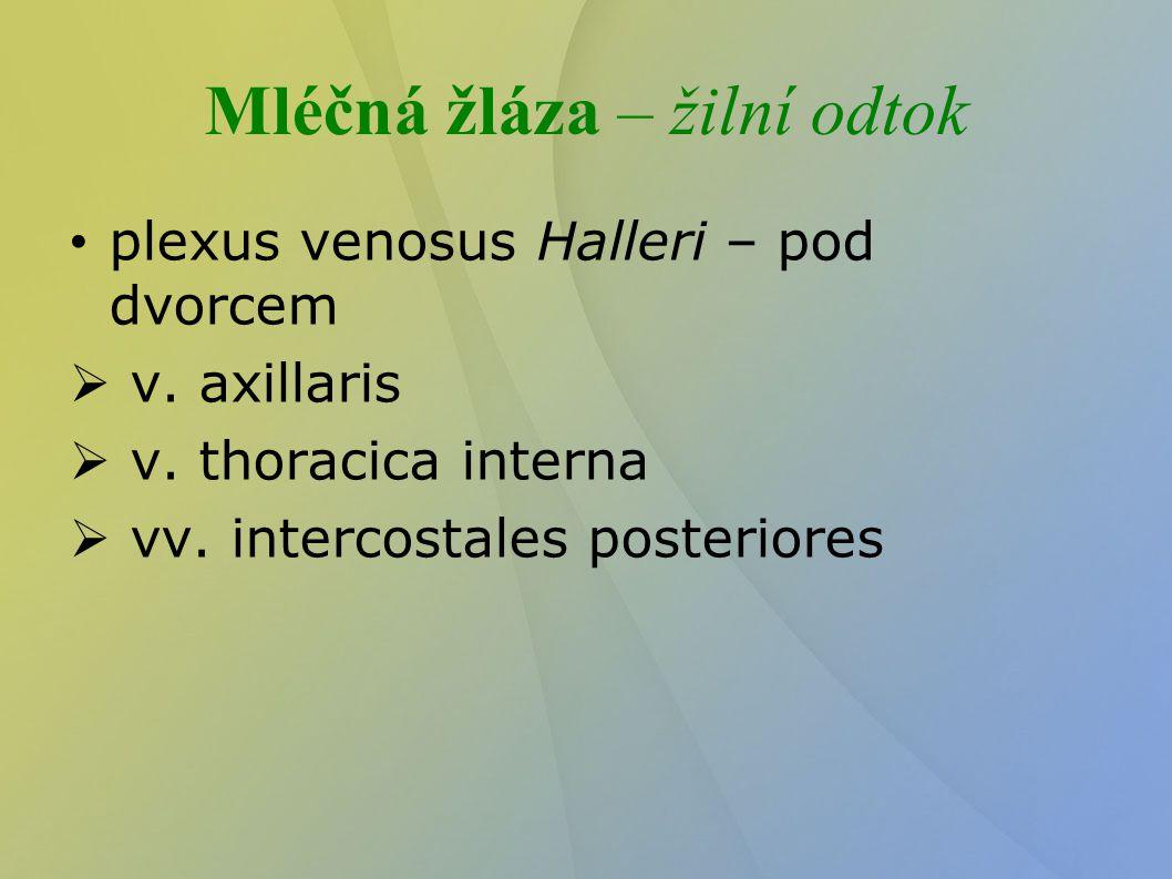 Mléčná žláza – žilní odtok plexus venosus Halleri – pod dvorcem  v. axillaris  v. thoracica interna  vv. intercostales posteriores