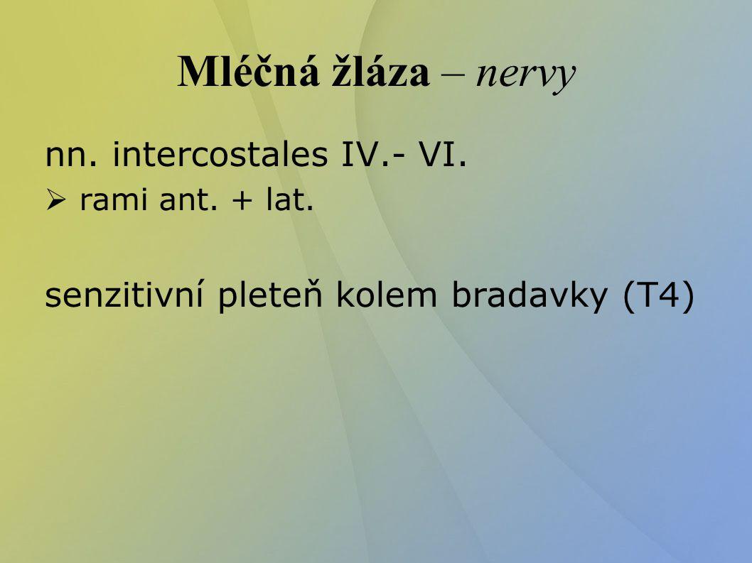 Mléčná žláza – nervy nn. intercostales IV.- VI.  rami ant. + lat. senzitivní pleteň kolem bradavky (T4) 