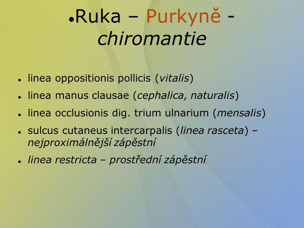 linea oppositionis pollicis (vitalis)  linea manus clausae (cephalica, naturalis)  linea occlusionis dig. trium ulnarium (mensalis)  sulcus cutaneu
