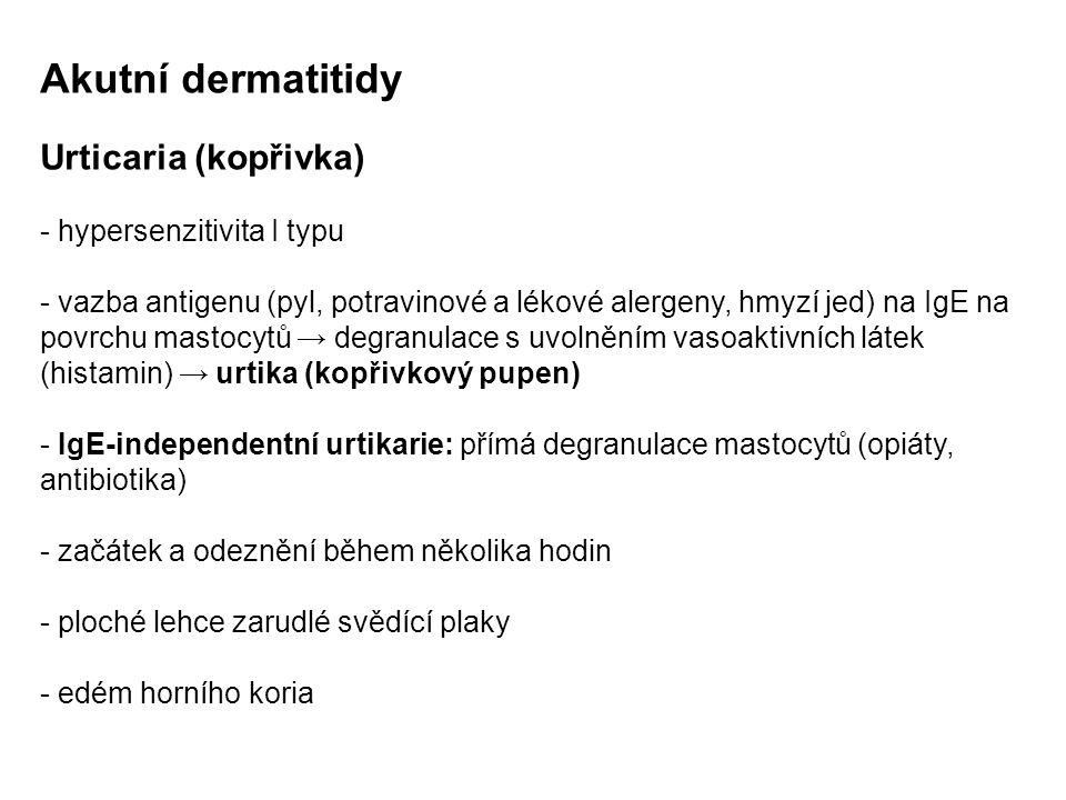 Akutní dermatitidy Urticaria (kopřivka) - hypersenzitivita I typu - vazba antigenu (pyl, potravinové a lékové alergeny, hmyzí jed) na IgE na povrchu mastocytů → degranulace s uvolněním vasoaktivních látek (histamin) → urtika (kopřivkový pupen) - IgE-independentní urtikarie: přímá degranulace mastocytů (opiáty, antibiotika) - začátek a odeznění během několika hodin - ploché lehce zarudlé svědící plaky - edém horního koria