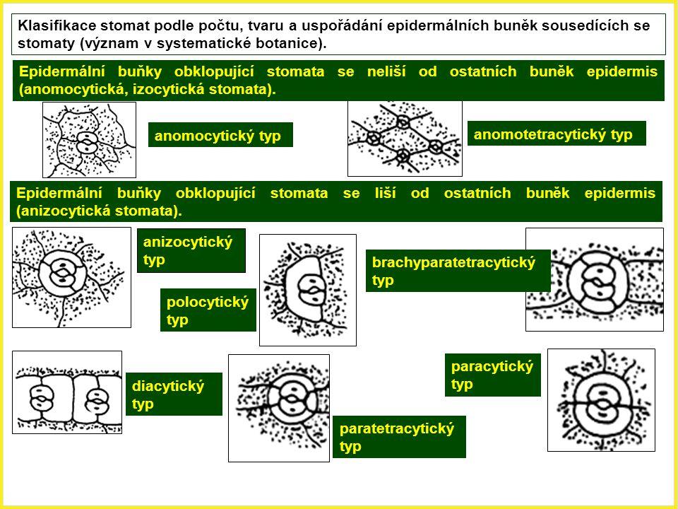 Klasifikace stomat podle počtu, tvaru a uspořádání epidermálních buněk sousedících se stomaty (význam v systematické botanice). anomocytický typ anomo