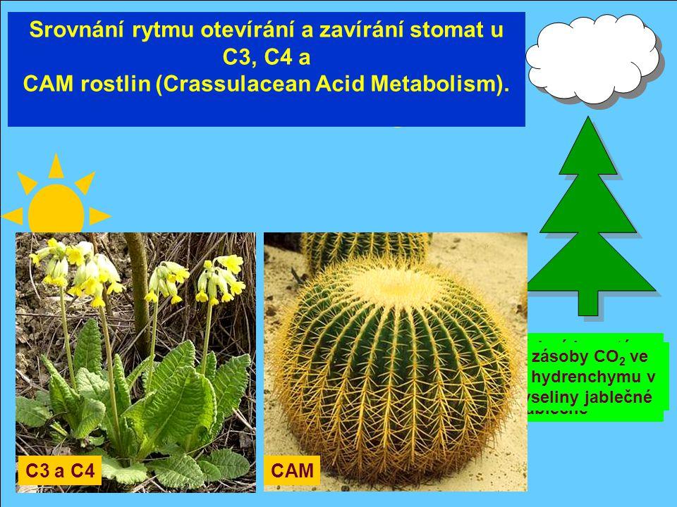 CO 2 fotosyntéza CO 2 potřebný k syntéze cukrů je získáván dekarboxylací kyseliny jablečné Srovnání rytmu otevírání a zavírání stomat u C3, C4 a CAM r