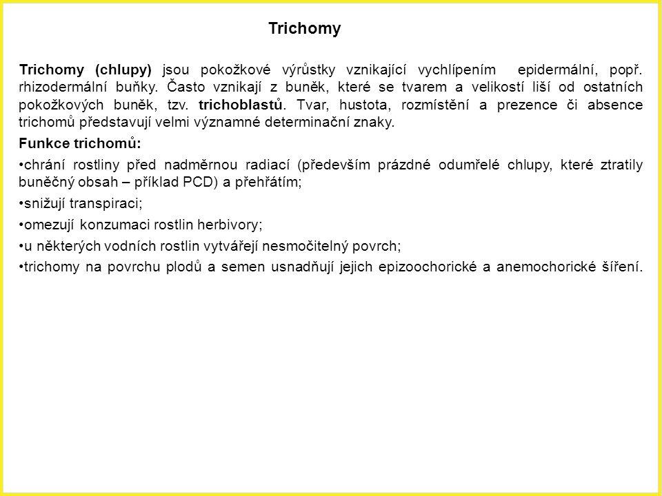Trichomy Trichomy (chlupy) jsou pokožkové výrůstky vznikající vychlípením epidermální, popř. rhizodermální buňky. Často vznikají z buněk, které se tva