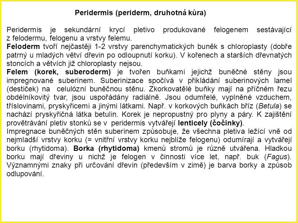 Peridermis (periderm, druhotná kůra) Peridermis je sekundární krycí pletivo produkované felogenem sestávající z felodermu, felogenu a vrstvy felemu. F