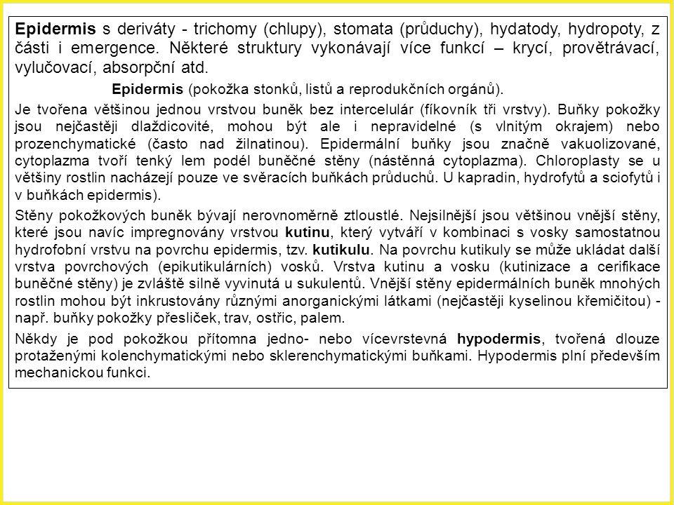 Epidermis s deriváty - trichomy (chlupy), stomata (průduchy), hydatody, hydropoty, z části i emergence. Některé struktury vykonávají více funkcí – kry