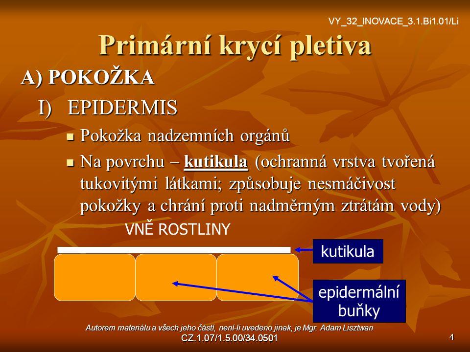 Primární krycí pletiva A) POKOŽKA I)EPIDERMIS Pokožka nadzemních orgánů Na povrchu – kutikula (ochranná vrstva tvořená tukovitými látkami; způsobuje nesmáčivost pokožky a chrání proti nadměrným ztrátám vody) kutikula epidermální buňky VNĚ ROSTLINY 4 VY_32_INOVACE_3.1.Bi1.01/Li Autorem materiálu a všech jeho částí, není-li uvedeno jinak, je Mgr.