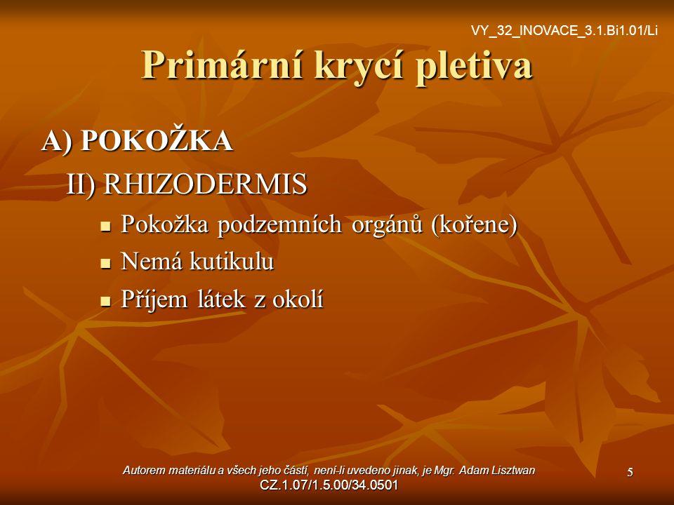 Primární krycí pletiva A) POKOŽKA II) RHIZODERMIS Pokožka podzemních orgánů (kořene) Nemá kutikulu Příjem látek z okolí 5 VY_32_INOVACE_3.1.Bi1.01/Li Autorem materiálu a všech jeho částí, není-li uvedeno jinak, je Mgr.