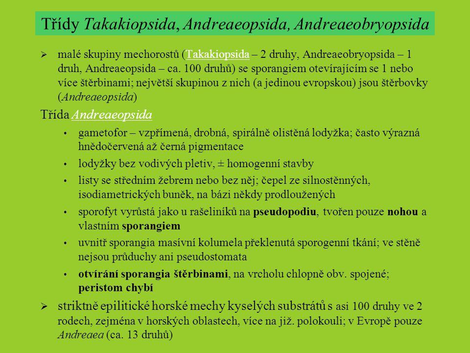 Třídy Takakiopsida, Andreaeopsida, Andreaeobryopsida  malé skupiny mechorostů (Takakiopsida – 2 druhy, Andreaeobryopsida – 1 druh, Andreaeopsida – ca