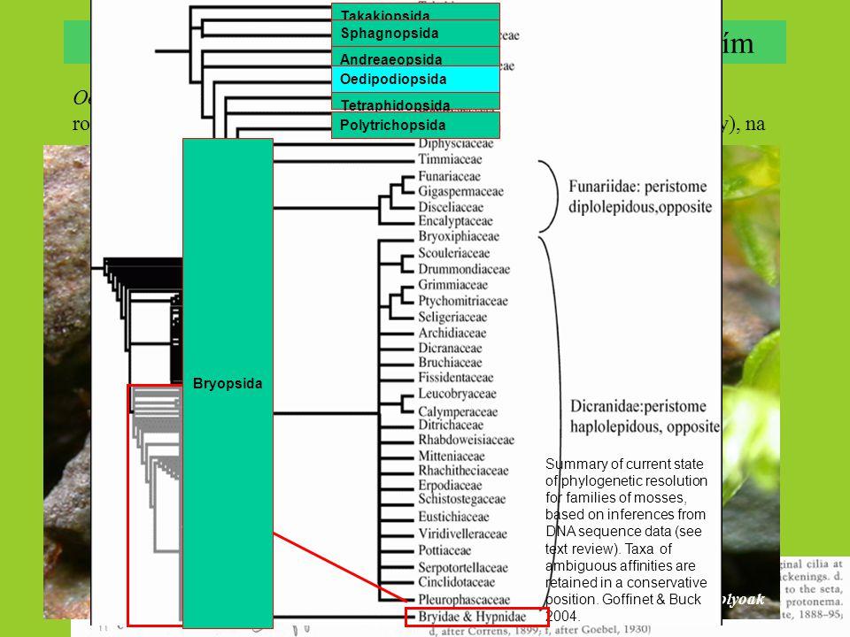 Oedipodium griffithianum – drobný akrokarpní mech, disjunktně boreální rozšíření (Aljaška, Grónsko, Brit. ostrovy, Skandinávie, Japonsko; Falklandy),